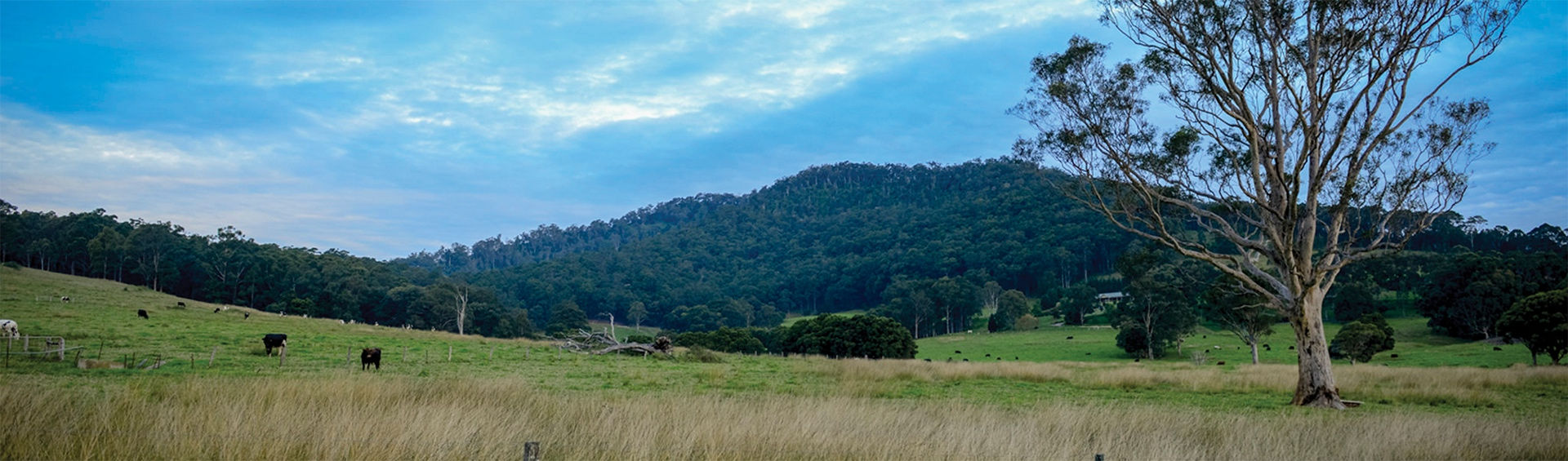 The ultimate guide to Berry, NSW